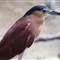 2013-08-15 - Jurong Bird Park-3302