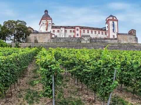 Vineyard of Fortress Marienberg
