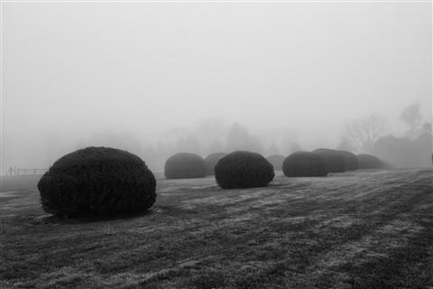 Fog 081