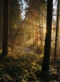Romantic Forest Light
