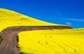 road through palouse canola field