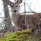 deer_9537