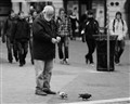 only pigeons