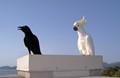 Black as a crow white as a cockatoo