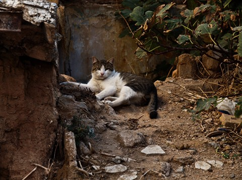 comfy in the rubble