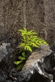 Fern in the quarry