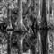 Loxahatchee CypressTwo BW