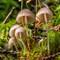 405_1295: Pikkuruisia sieniä ja sammalta