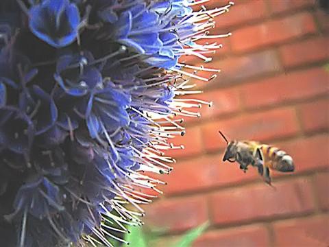 Bee sharp 1