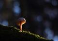 mushroom on the way