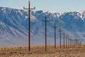 Telegraph Wire Poles-5515