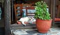 Tavern kitty