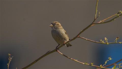 Birdie inna tree!