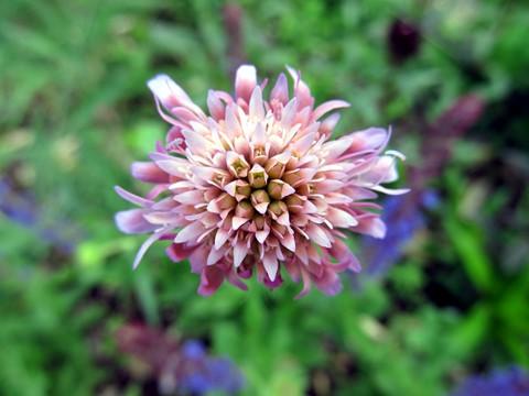 flower_IMG_3452