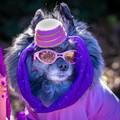 Doggie Parade