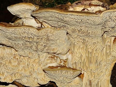 Giant tree mushroom