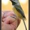 Birdy Headshot