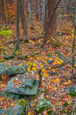 Brandywine Fall