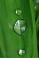 green druppels