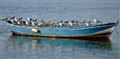 boat for seagulls