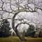 limbotree