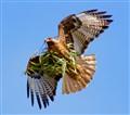 fast nest repair