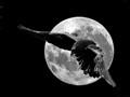 lune-corbeau
