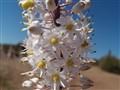 Wild flower hidden beauty