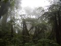 Misty Montane Forest