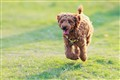 My running Sweetie