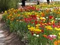 flora festival
