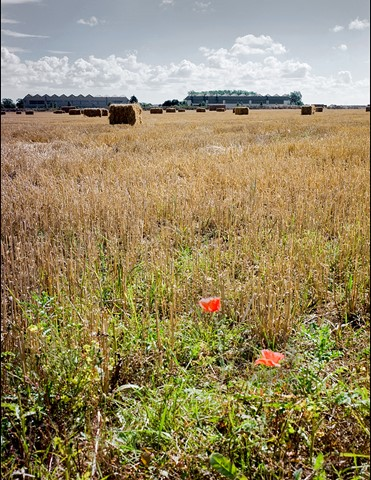 Remembrance, September 1943.  The Wolds, Lincolnshire