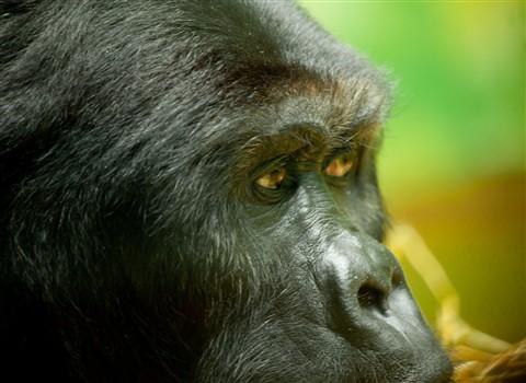 Antwerpen Zoo 2009-003