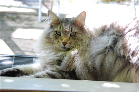 Magnus (2)