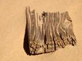 Buried wood