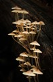 High rise fungi