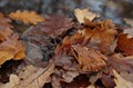 Hidden amongst the leafs