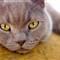 Jasper the cat
