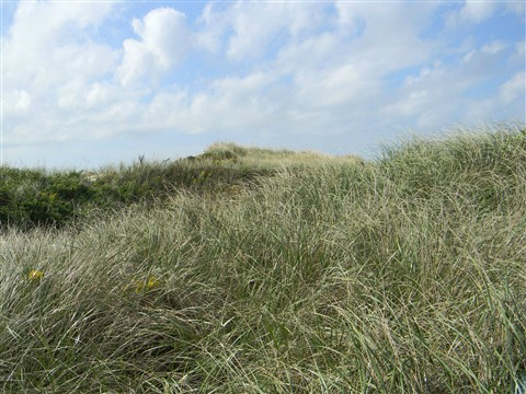 The Dunes at Eel Point Beach, Nantucket