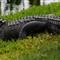 Alligator (1024x426)