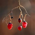 November Berries