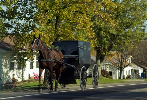 Amish-carriage