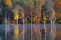 Long Pond Fall