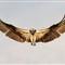 IMG_7979_osprey2