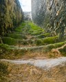 Moss covered stairway in Essaouira Morocco