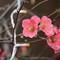 karls.2017.08.26-1.d750.and.em1.2.aircon.flower.DSC_3639