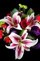 Casablanca lilies.