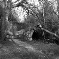 branchbridge