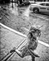 Runnin in the rain