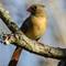 Birds14_Jan14_209_eds